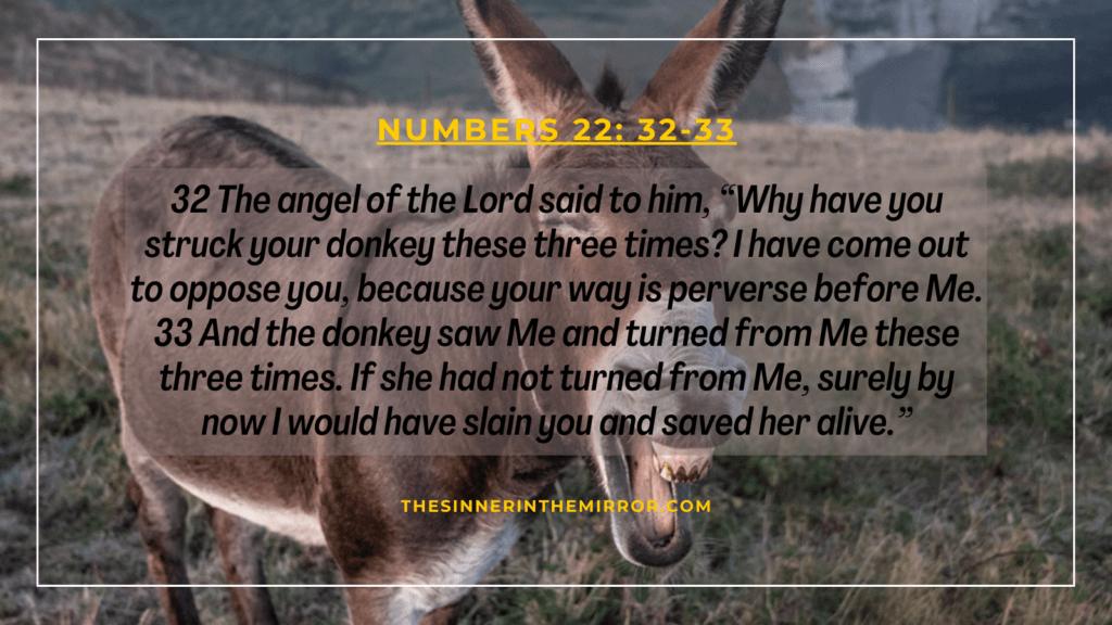 donkey of Balaam