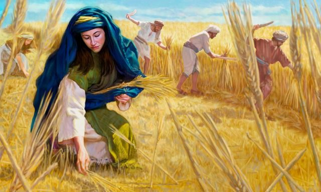 Ruth - gleaning in the fields of Boaz